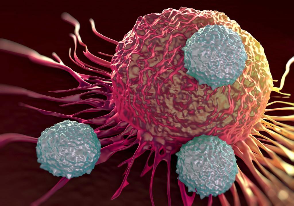 T-cellen-vallen-kankercel-aan. Bron: doktermedia.nl
